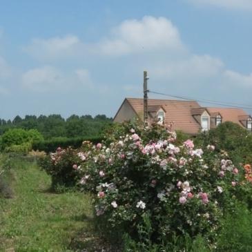 Journée à la Roseraie de Morailles, le samedi 9 juin