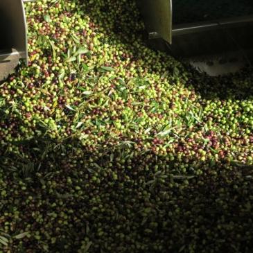 Quelques nouvelles de notre productrice d'olives bio !