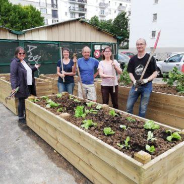 L'AMAP lauréate de la plus belle parcelle de jardin partagé
