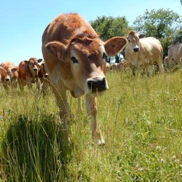 Partenariat viande bovine 2020 – jusqu'au 12 février