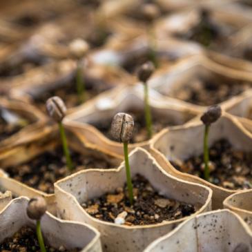 Atelier semis le 22 mars – avec photos