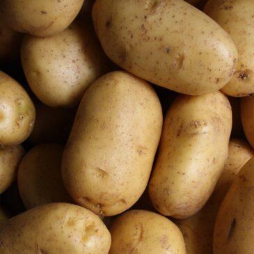 Recette de la semaine : pommes de terre au four et au romarin
