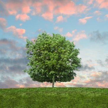 Lettre ouverte pour la co-construction d'un Plan Climat Air Energie sur le territoire de Vallée Sud Grand Paris