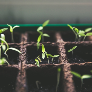 Jardiner à Montrouge : quoi de neuf au bout de 2 semaines ?